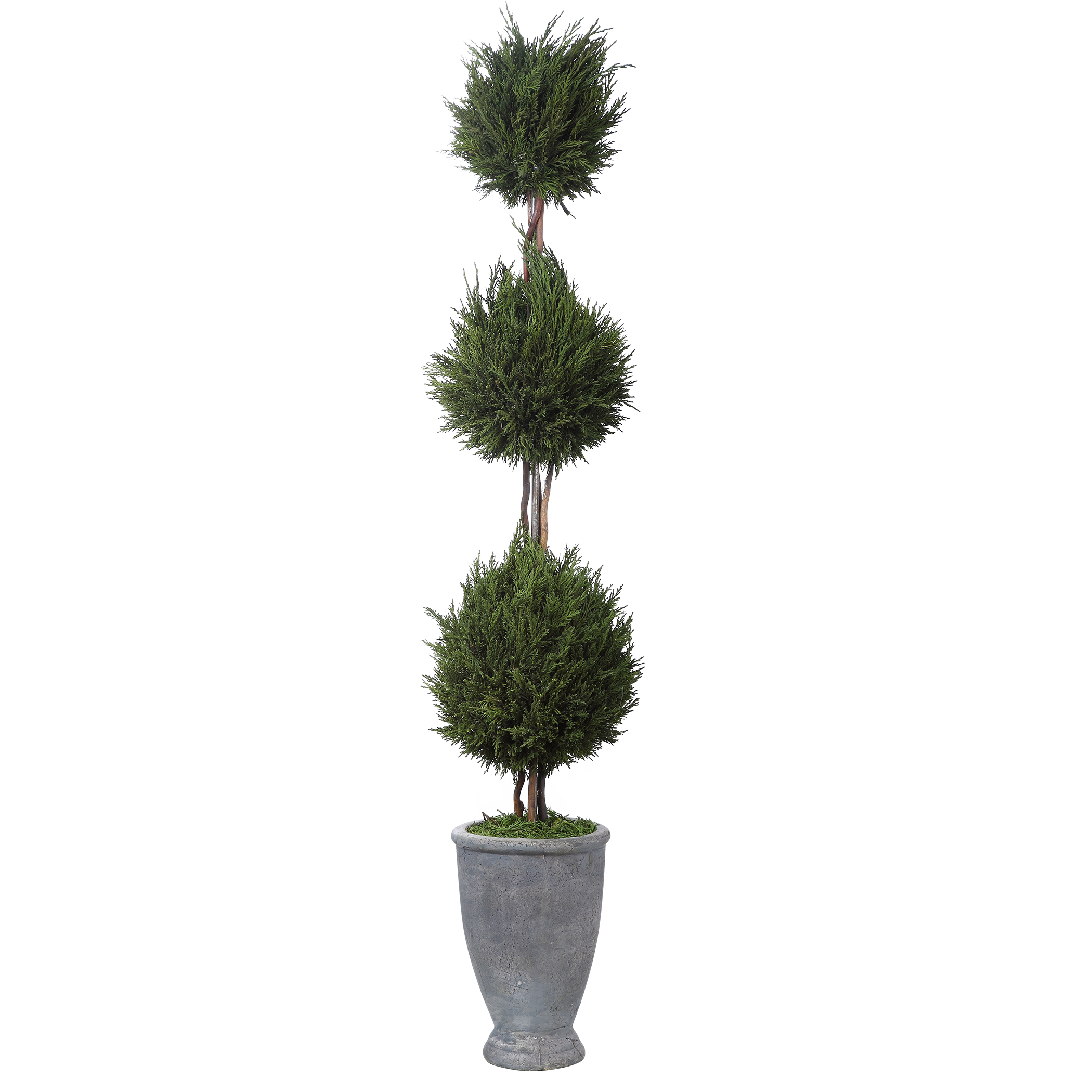 Uttermost Cypress Triple Topiary